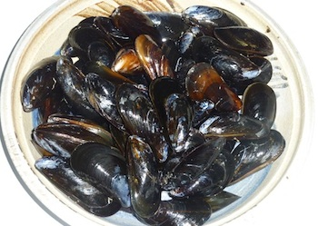 Picture of Prince Edward Island mussels, cleaned and ready to cook / www.super-seafood-recipes.com